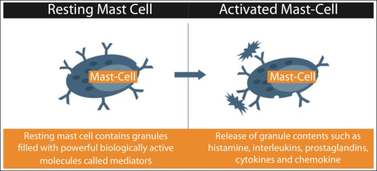 MCAS-mast-cell-activity-1024x465